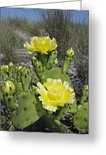 Opuntia Opuntia Sp Cactus Flowering Greeting Card