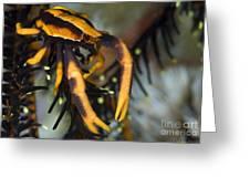 Orange And Brown Elegant Squat Lobster Greeting Card