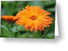 Orange And Green II Greeting Card