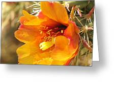 Orange And Yellow Cactus Flower Greeting Card