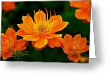 Orange And Yellow Greeting Card