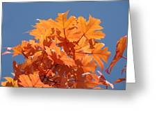 Orange Autumn Leaves Art Prints Blue Sky Greeting Card