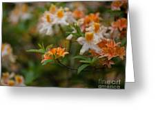 Orange Brilliance Greeting Card