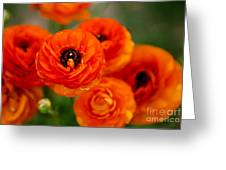 Orange Bulbs Greeting Card