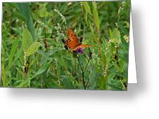 Orange Butterfly Greeting Card by Beverly Hammond