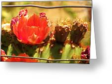 Orange Cactus Flower With Fence Greeting Card