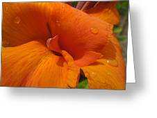 Orange Canna Greeting Card