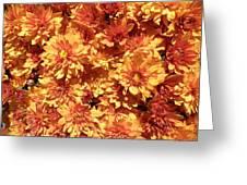 Orange Chrysanthemums Greeting Card