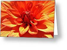 Orange Dahlia  Greeting Card by Daniele Smith