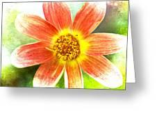 Orange Dahlia On Green Greeting Card