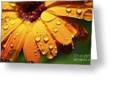 Orange Daisy And Raindrops Greeting Card