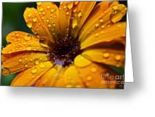 Orange Daisy In The Rain Greeting Card