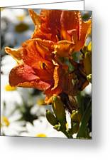 Orange Day Lilies In The Sun Greeting Card