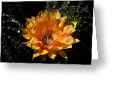 Orange Echinopsis Flower  Greeting Card