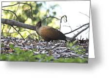 Orange Footed Scrub Fowl Greeting Card