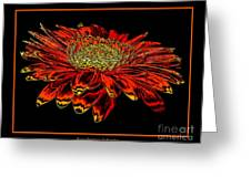Orange Gerbera Daisy With Chrome Effect Greeting Card