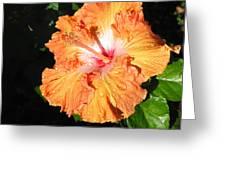 Orange Hibiscus After The Rain 1 Greeting Card