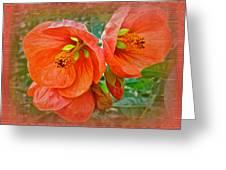 Orange Hibiscus Flowers Greeting Card