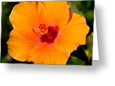 Orange Hibiscus Greeting Card