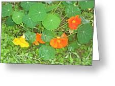 Orange Ivy Greeting Card