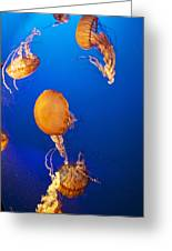 Orange Jellies Greeting Card