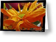 Orange Juice Daisy Greeting Card