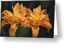 Orange Kwanso Daylily Pair Greeting Card