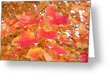 Orange Leaves 2 Greeting Card