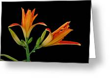 Orange Lily On Black Greeting Card