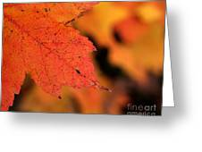 Orange Maple Leaf Greeting Card by Chris Hill