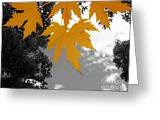 Orange Maple Leaves Greeting Card