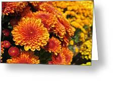 Orange Mum Greeting Card