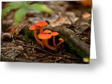 Orange Mushrooms Greeting Card