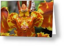 Orange Orchid Clown Greeting Card