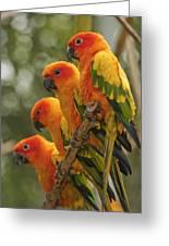 Orange Parakeets Chiang Mai Thailand Greeting Card