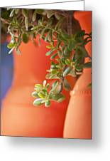 Orange Pots Of The Jardin Marjorelle Morocco Greeting Card