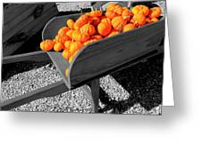 Orange Pumpkin Harvest Greeting Card
