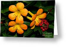 Orange Rhododendron Flowers Greeting Card