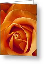Orange Rose Close Up Greeting Card