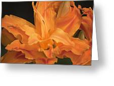 Orange Ruffles Greeting Card