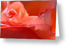 Orange Sensation Greeting Card