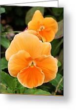 Orange Sickle Pansies Greeting Card
