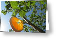 Orange Slice Greeting Card