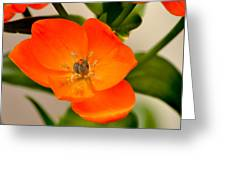 Orange Star   Greeting Card