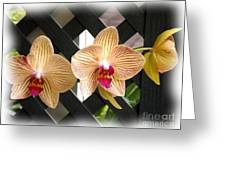 Orange Striped Orchids Greeting Card