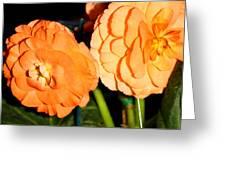 Orange Tuberous Begonias Greeting Card