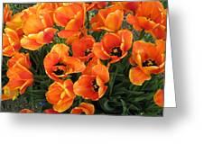 Orange Tulips Greeting Card