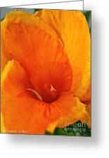 Orange Twist Greeting Card by Susan Herber
