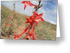 Orange Wildflower Greeting Card