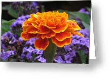 Orange With Blue Greeting Card
